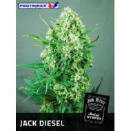 Jack Diesel Feminizadas - Positronics Seeds