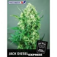 Jack Diesel Express Feminizadas - Positronics Seeds