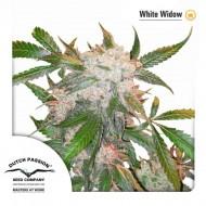 White Widow Feminizadas - Dutch Passion Seeds