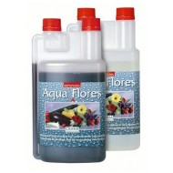 Aqua Flores  A (Canna)