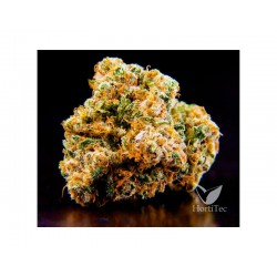 BLUE DREAM FEMINIZADA ARTIZEN SEEDS